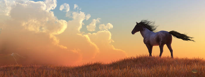Wild Horse and Approaching Storm