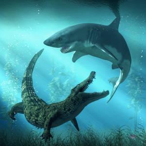 Shark vs Crocodile