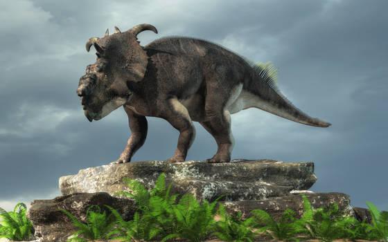 Pachyrhinosaurus on a Rock