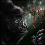 Elder Gorilla.
