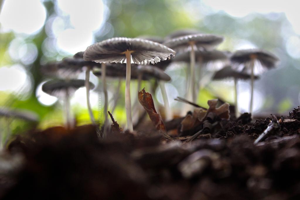 Mushroom Bokeh. by Zaellrin