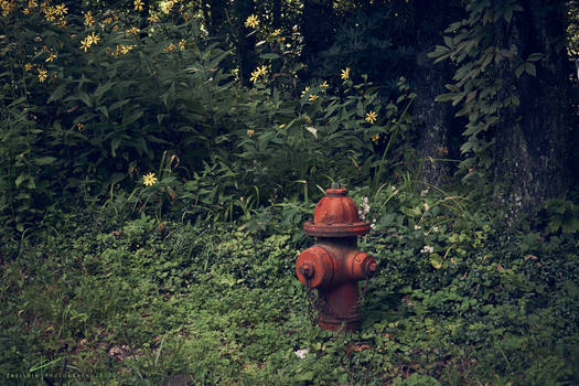 Forest Hydrant