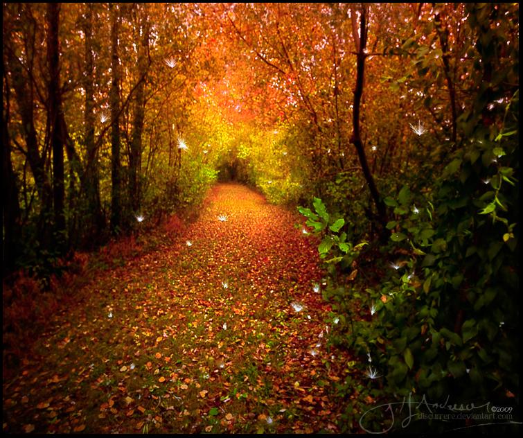 The enchanted forest by thinkingupwards