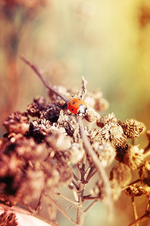 Ladybird by RayMilic