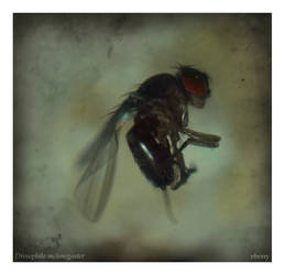 drosophila mutants II by lady-alessandra