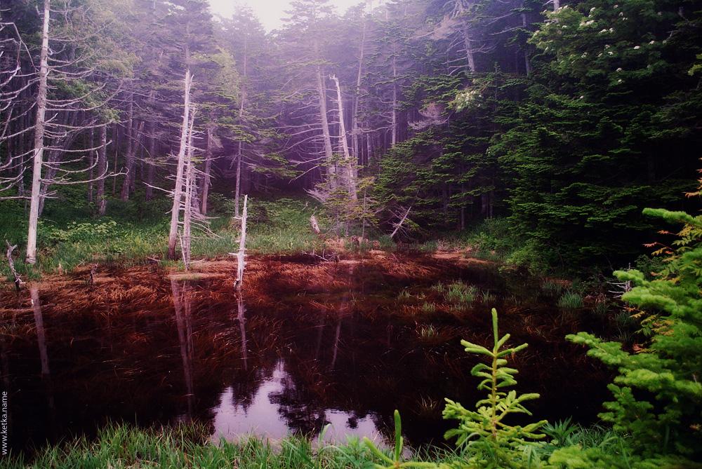 swamp by Ketka