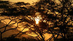 Sunset at Baluran II by psychoafro