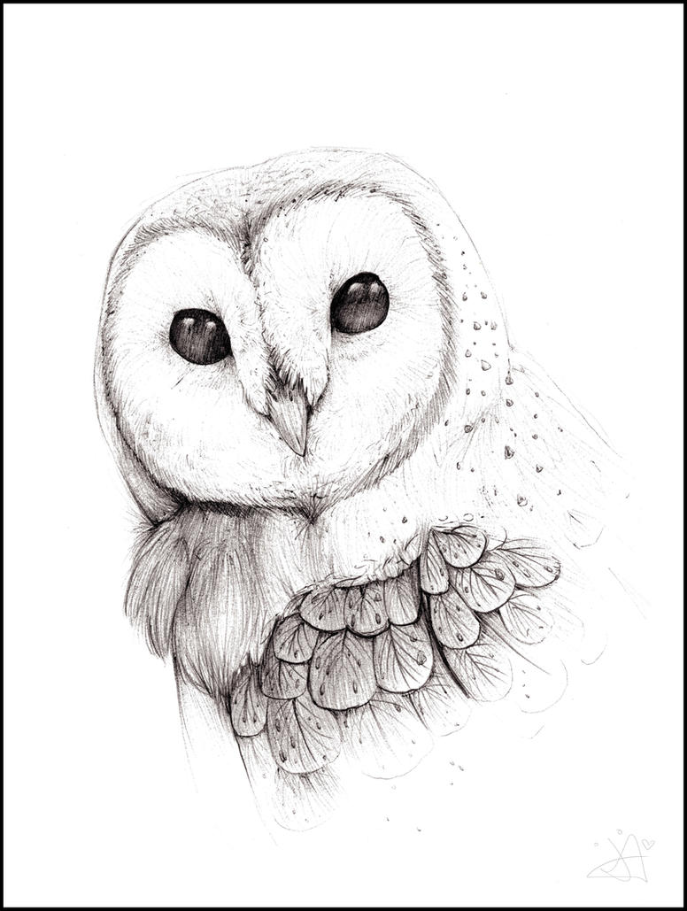 The gallery for --> Barn Owl Face Drawing
