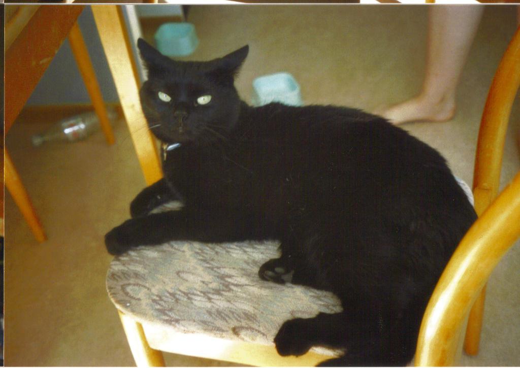 Bagheera in a chair 2