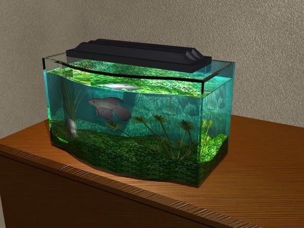 Betta fish tank by anidragon on deviantart for How big can a betta fish get