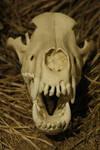 Dire Wolf Skull 1