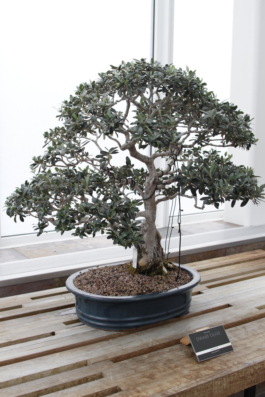 Bonsai Tree 5 By Castlegraphics On Deviantart