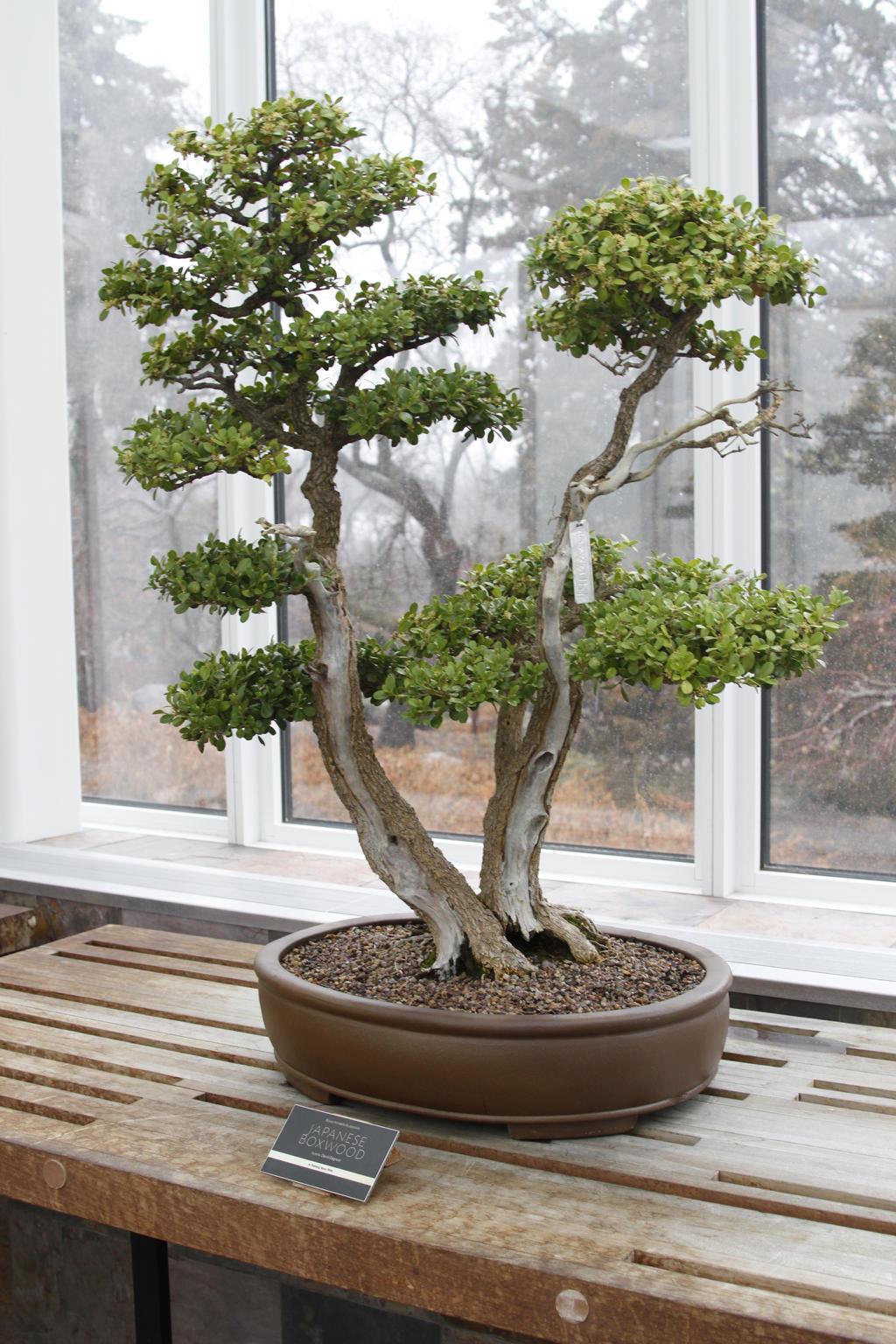 Bonsai Tree 6 by CastleGraphics
