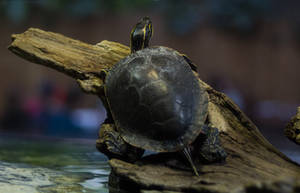 Turtle 4 by CastleGraphics