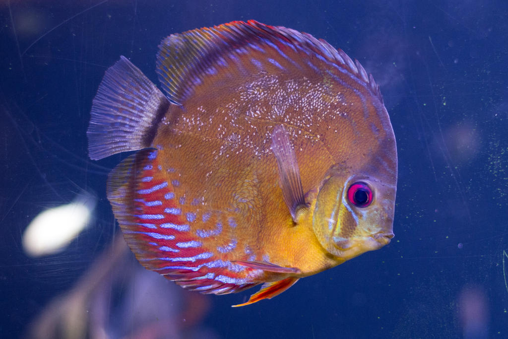 Tropical fish 14 by castlegraphics on deviantart for 405 tropical fish