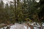 Landscape 173