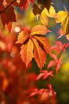 Autumnal light by Econita