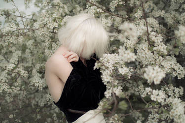 Spring Flowers II by Econita