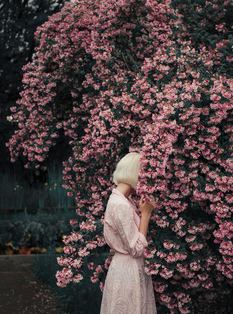 Bloom II by Econita