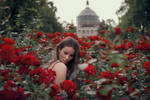 She paints the roses red III