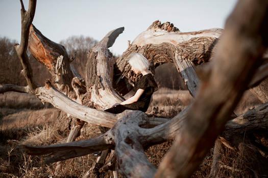 The Mammoth's Skeleton