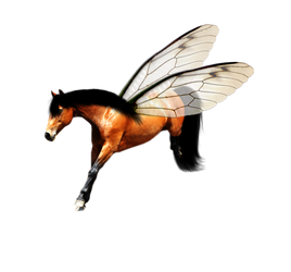 Jumping horse by ITSDura