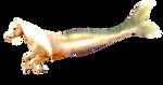 PNG merhorse