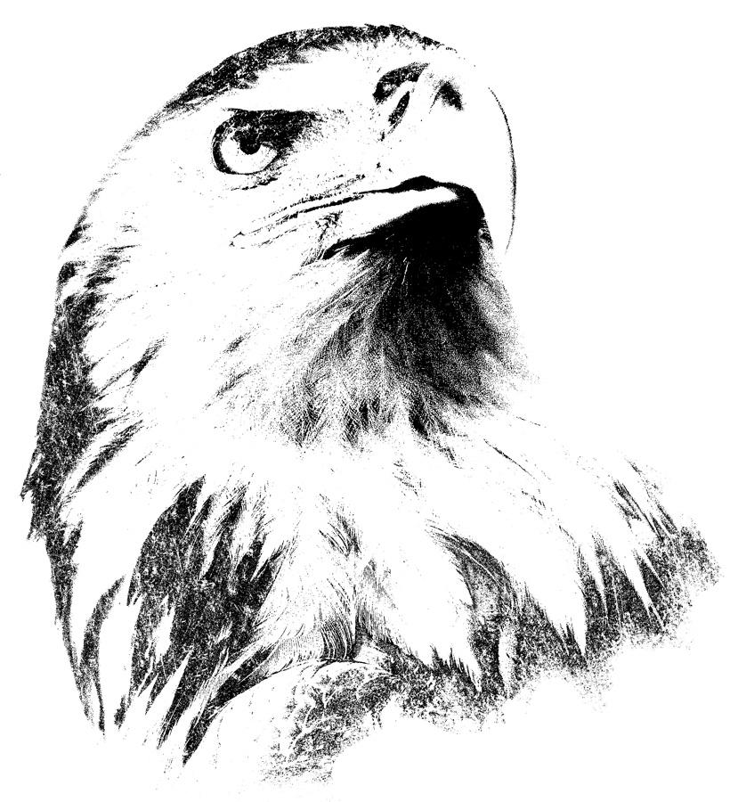 Eagle - Black-white by ilkerb on deviantART