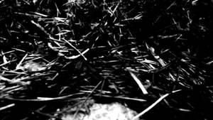 burned grass