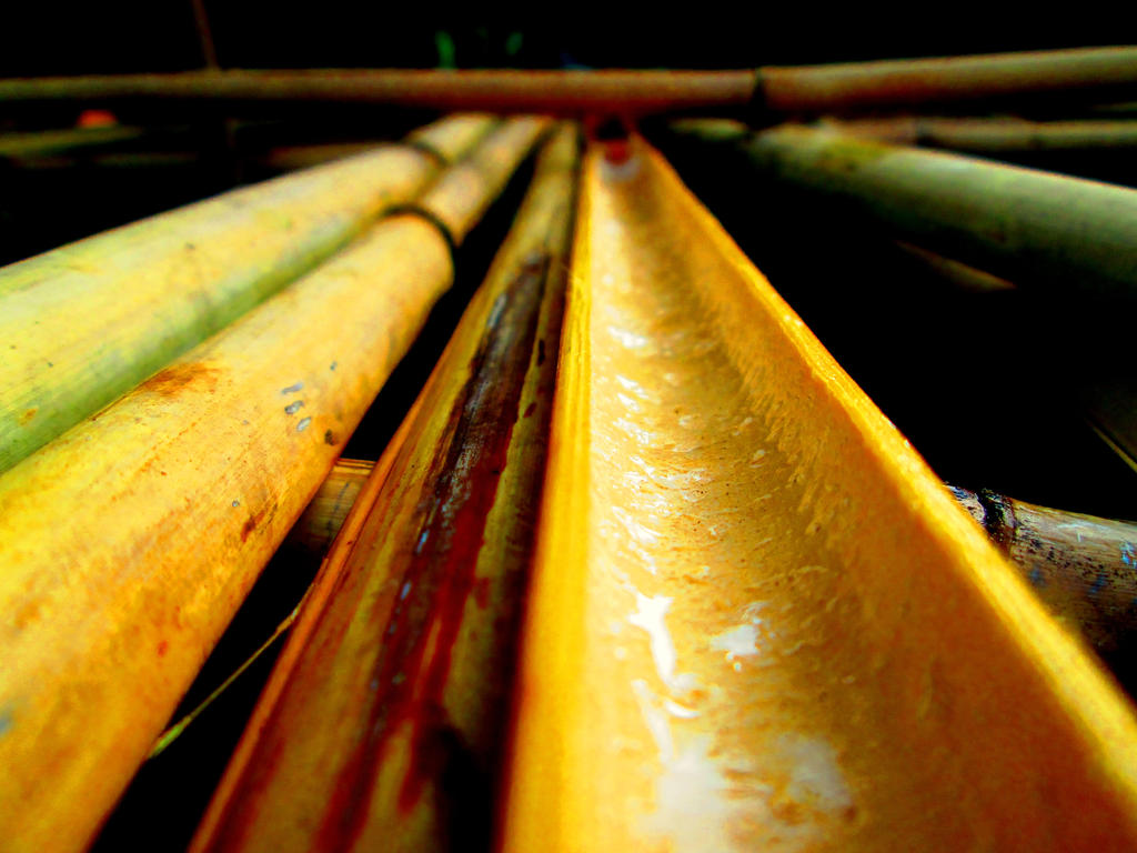 Bamboo #2