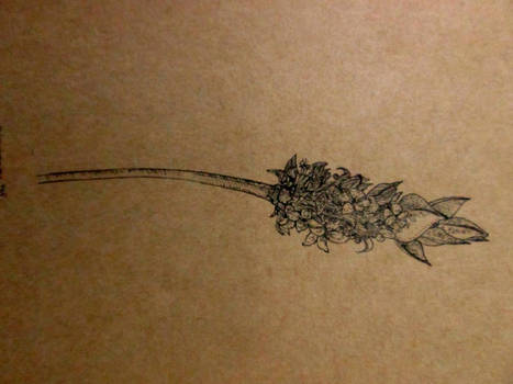 lavender?