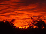 Blood Red Sunset