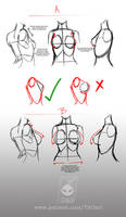 Drawing accurate female torso/ breasts by T-A-Oart