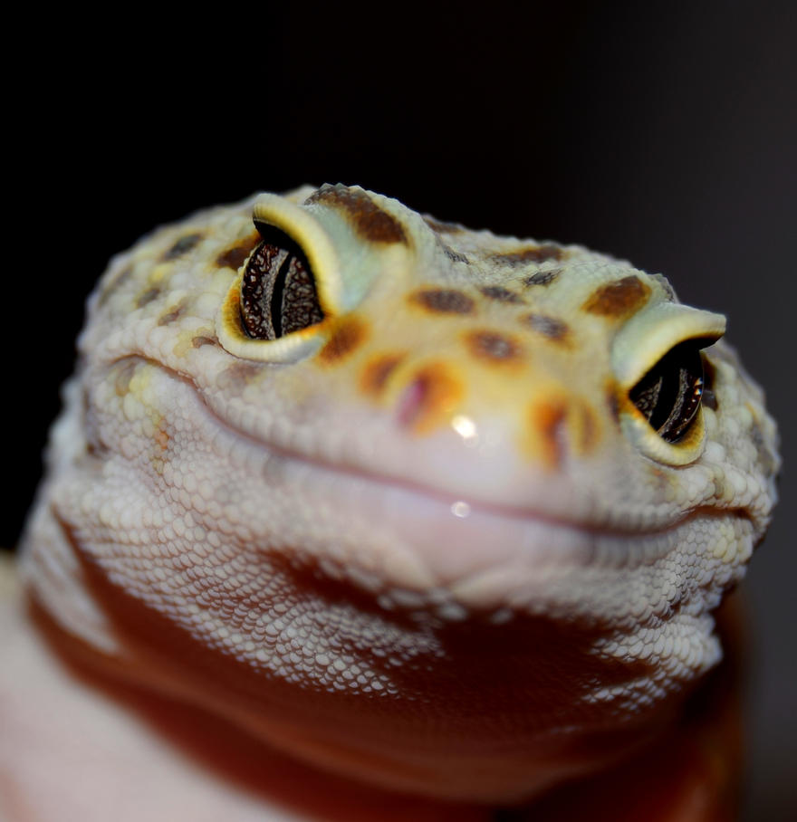 leopard gecko by ENRAGEDBAKU