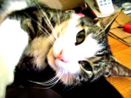 Lazy Kitty by jesska1
