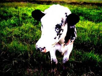 Got Milk? by jesska1