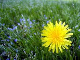 Dandelion Say RAWR by jesska1