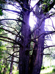 Entangled Trees by jesska1