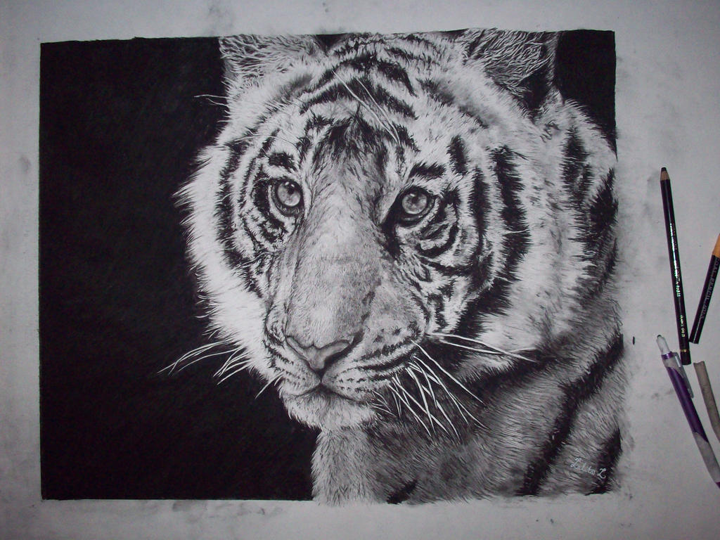 Tiger by Lalita17