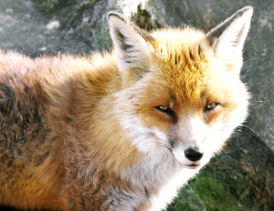 xZENFOXx's Profile Picture