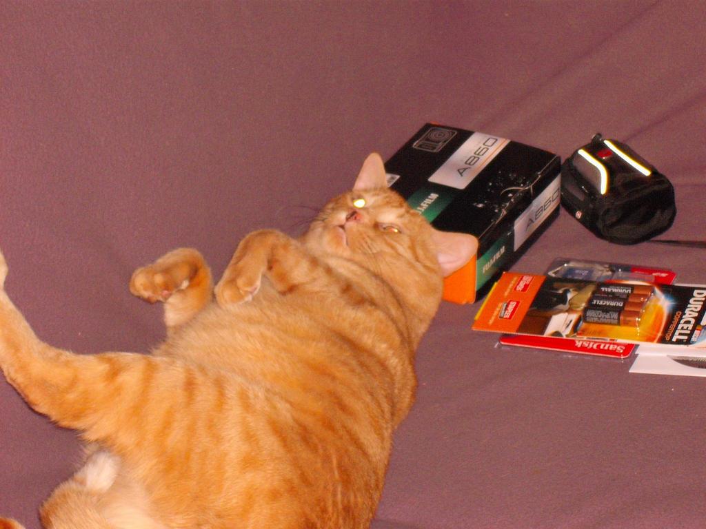 Sammy - The Orange Cat by Nova225