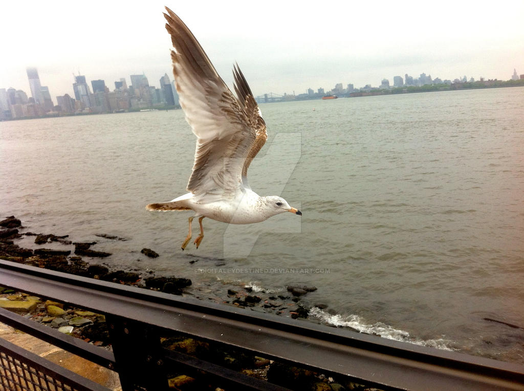 Al Hamza Staten Island