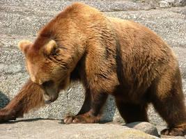 Bear by iskra85