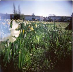 printemps 2