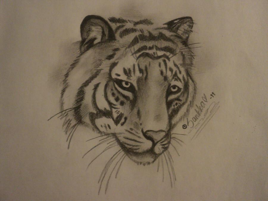 Tiger's Head by SuzkiTheTigress on DeviantArt