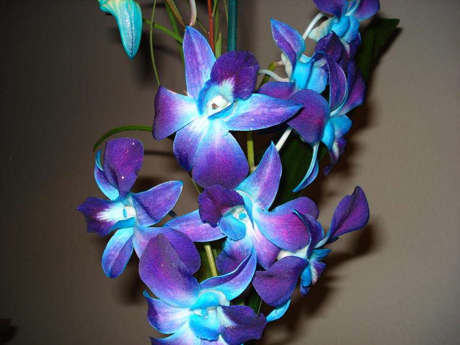 Pin Purple Orchids And Teal Feathers Perfect on Pinterest