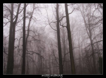 Misty Morning by angeleyes25