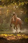 Strength in sunlight. by carinamaiwald