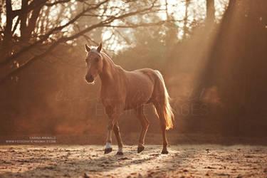 Morning Glory (Candy) by carinamaiwald
