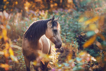 Fairytale Horse by carinamaiwald